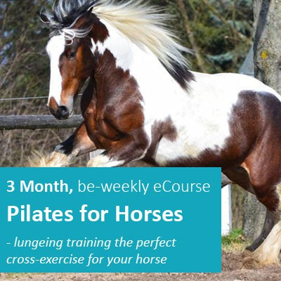 3-Month-Pilates-for-Horses